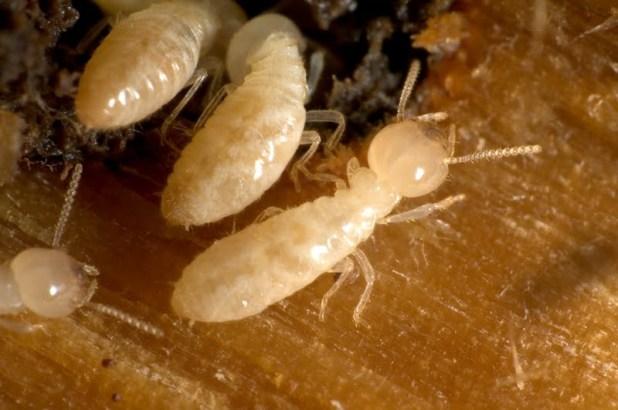نتيجة بحث الصور عن مكافحة النمل الأبيض